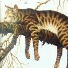 wieldcat